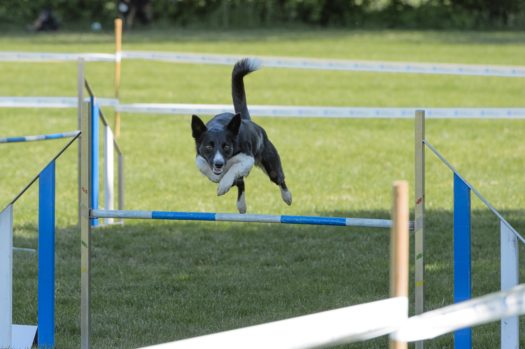 Agility Meeting Uster