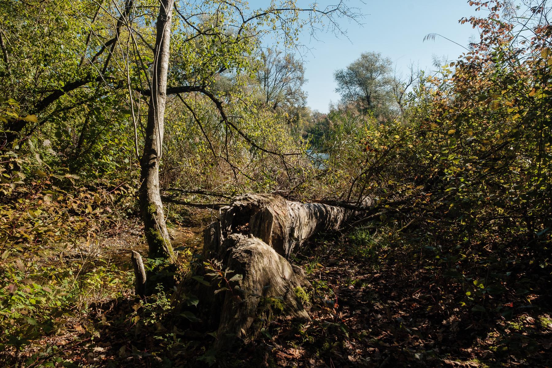 Alter Rhein Rüdlingen - Hans-Peter Breiter - www.zeitbilder.ch