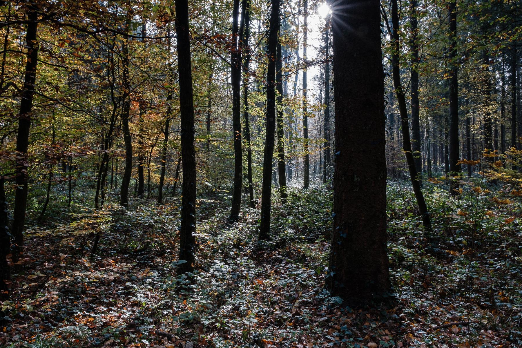 Steinenkreuz nähe Rüdlingen - Hans-Peter Breiter - www.zeitbilder.ch