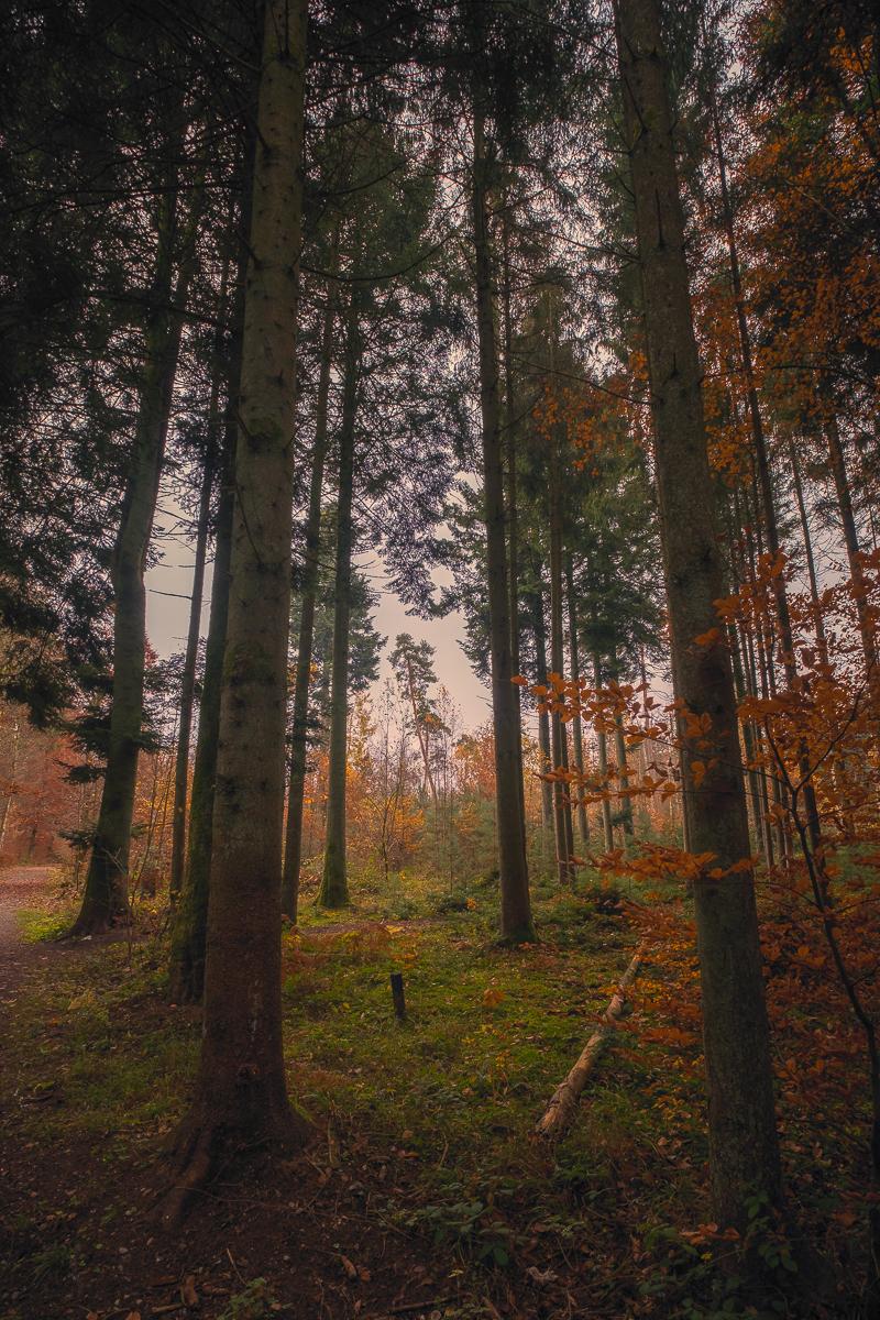 Bassersdorf - Wallisellen November 2018 - Hans-Peter Breiter - www.zeitbilder.ch