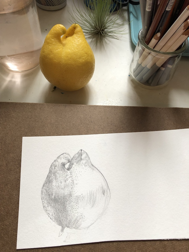 Mohammadi.Lemon drawing.jpg