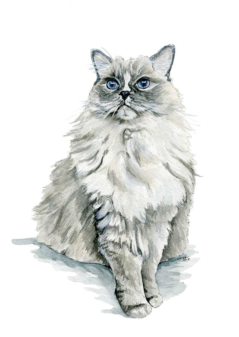 Oliver cat.jpg
