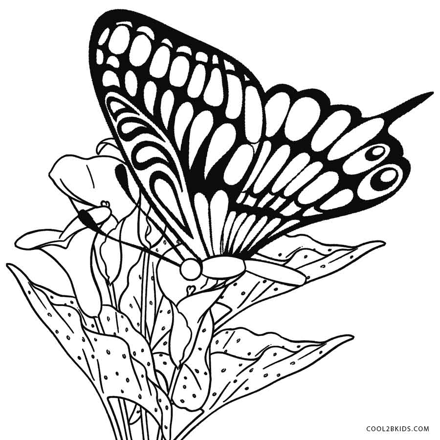 Printable-Butterfly-Coloring-Pages.jpg