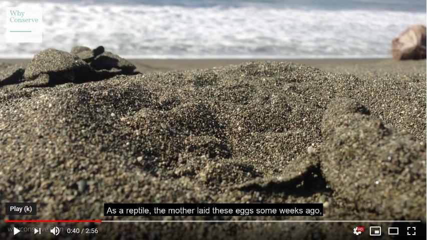 World Turtle Day beak and claw short film youtube screenshot