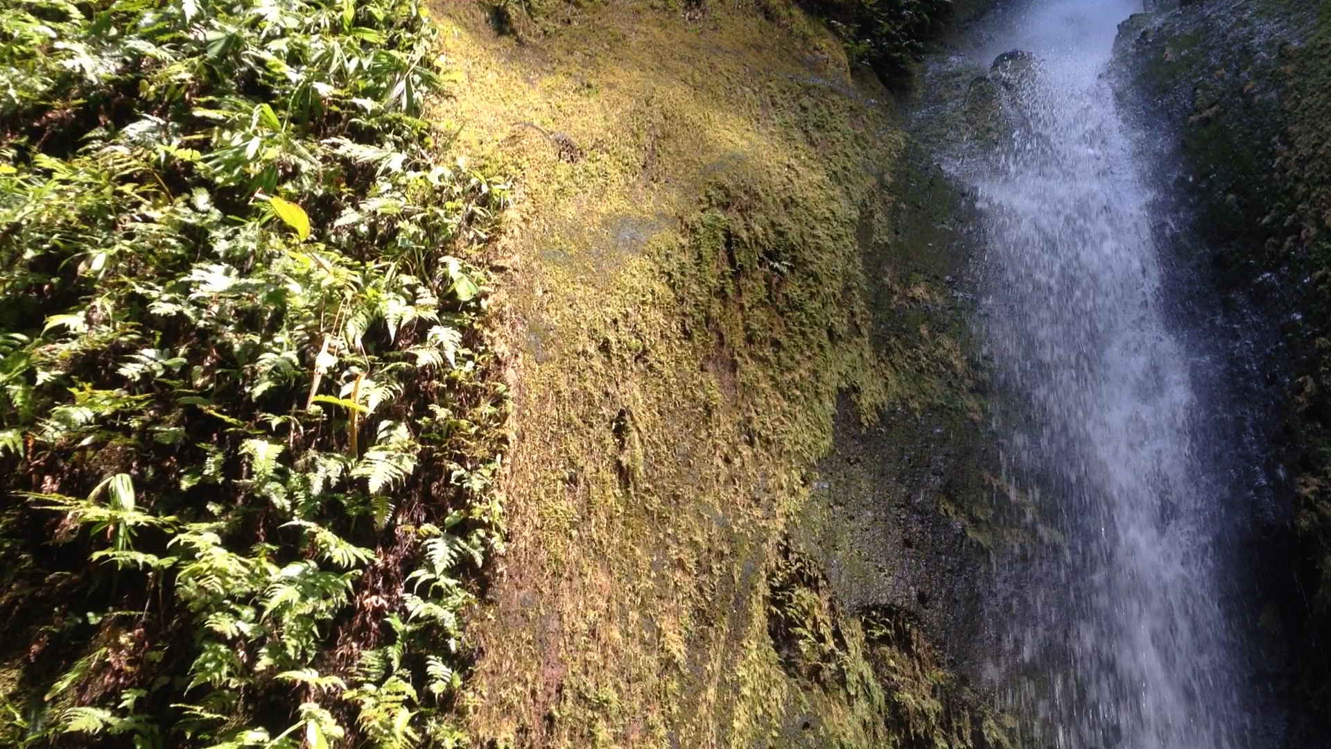 Today, founder Nathan published 10 short video clips from the rainforest in Costa Rica, including this of a secret waterfall, giving web visitors, followers and supporters a window into this spectacular wild environment - Happy #WorldRainforestDay!