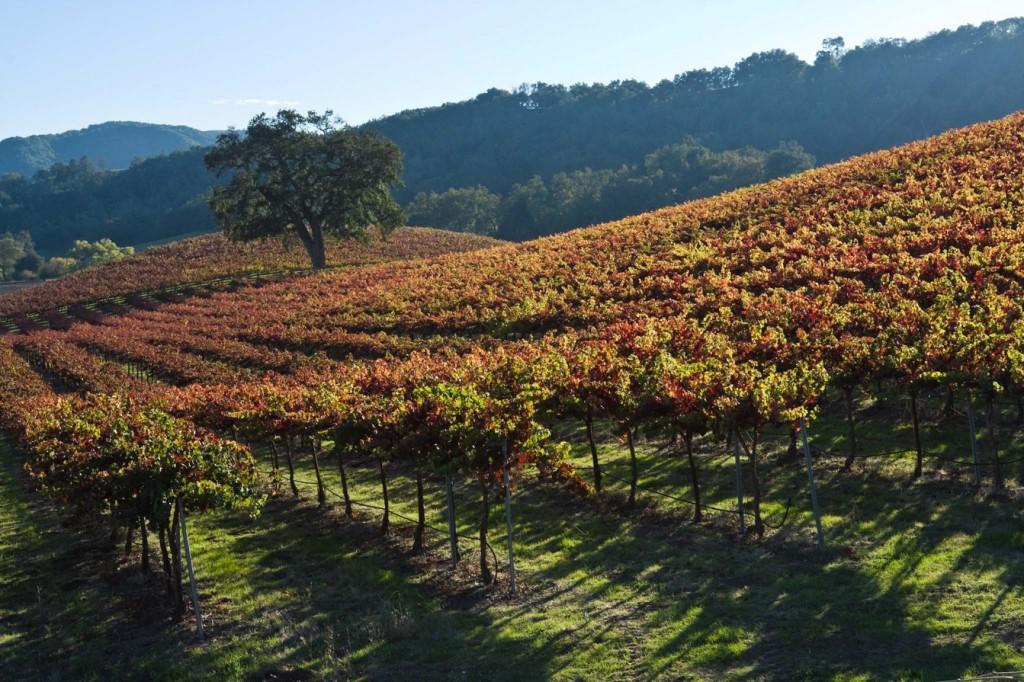 Harvest-Vineyard-Paso-Robles-1024x682.jpg