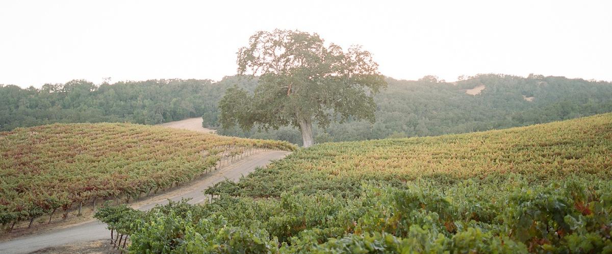 vineyard-landscape-photo2.jpg