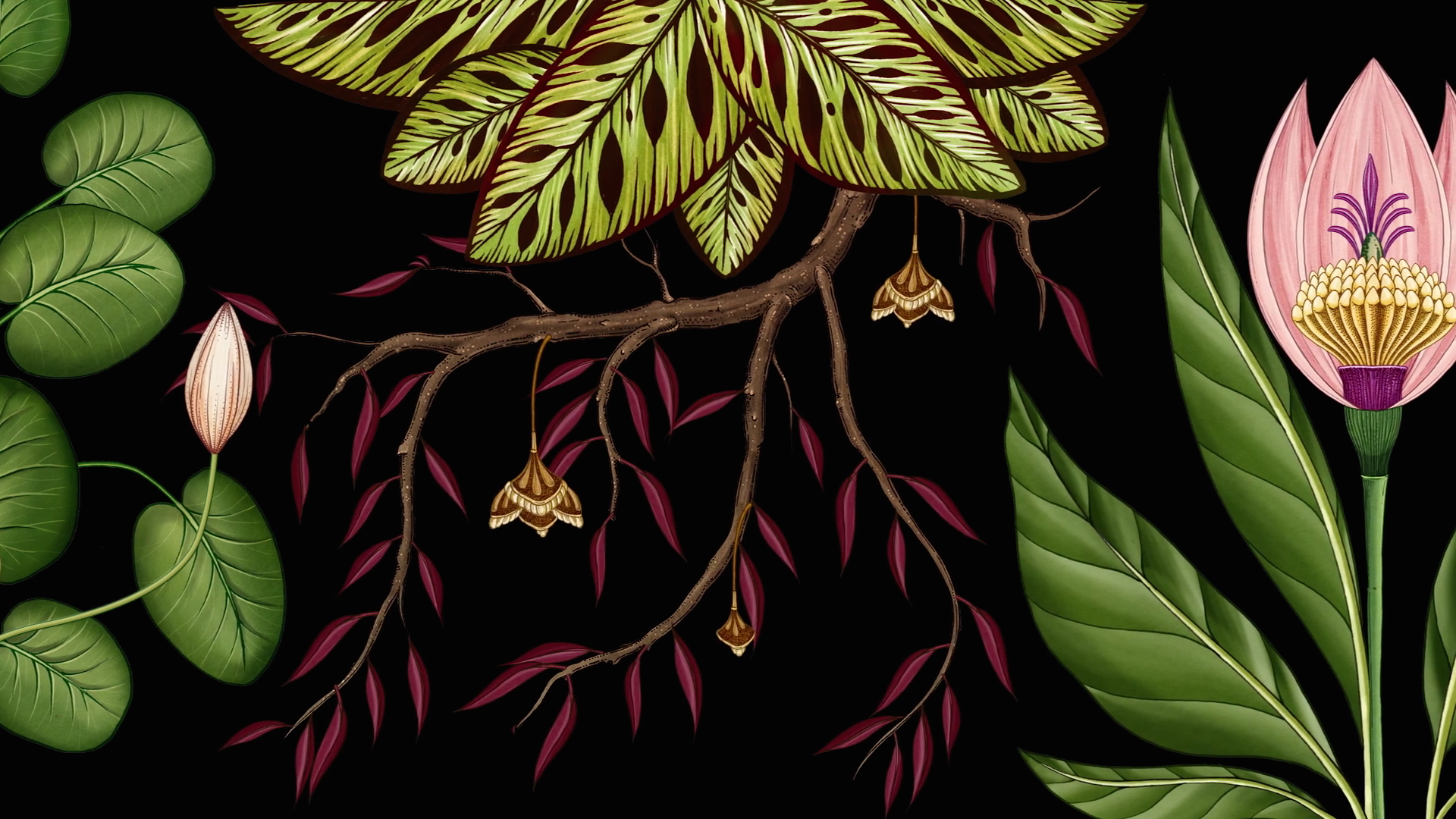 stills_from_publicis_botanical_an_animated_botanical_wallpaper-3.png