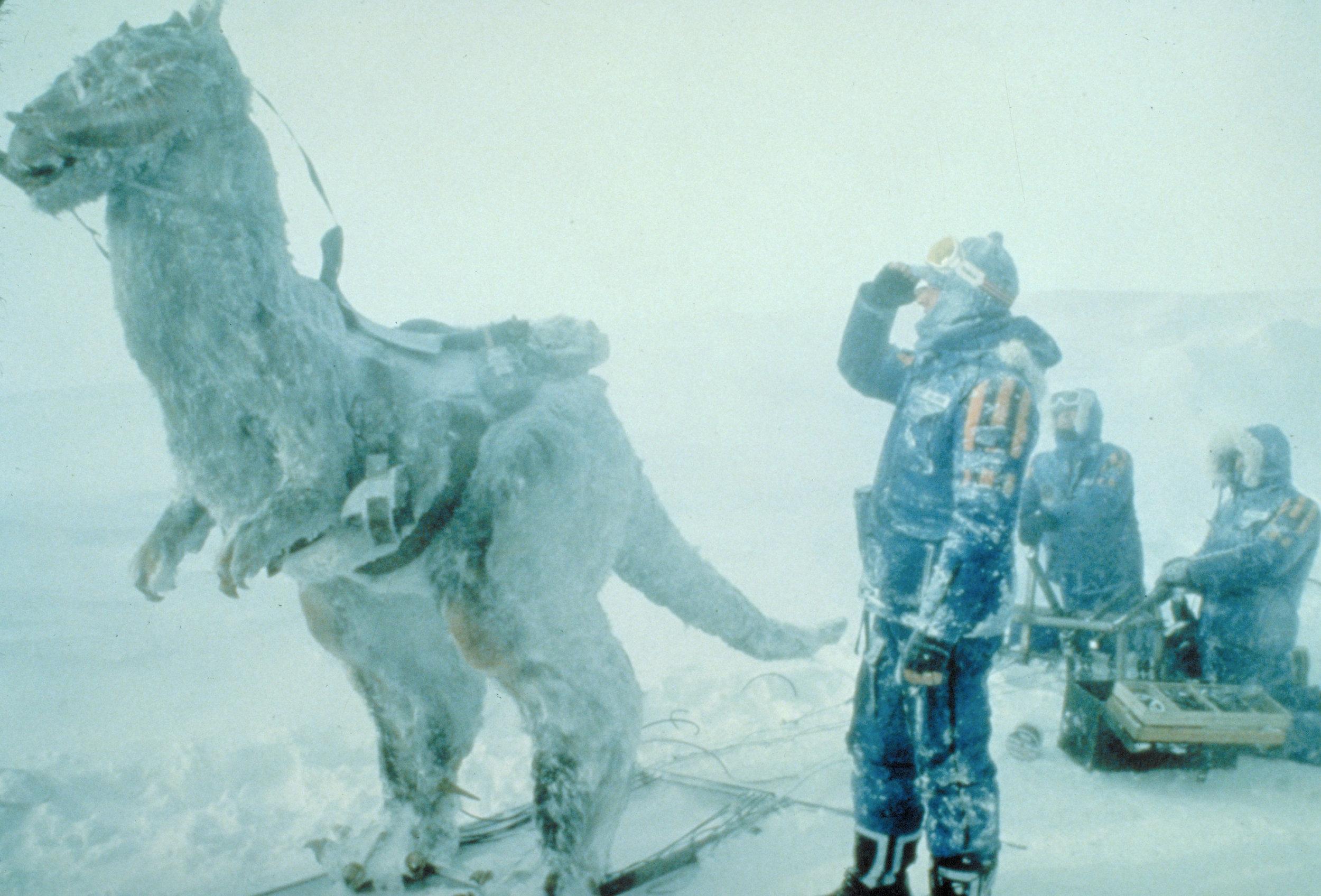 Snowy-Tauntaun.jpg