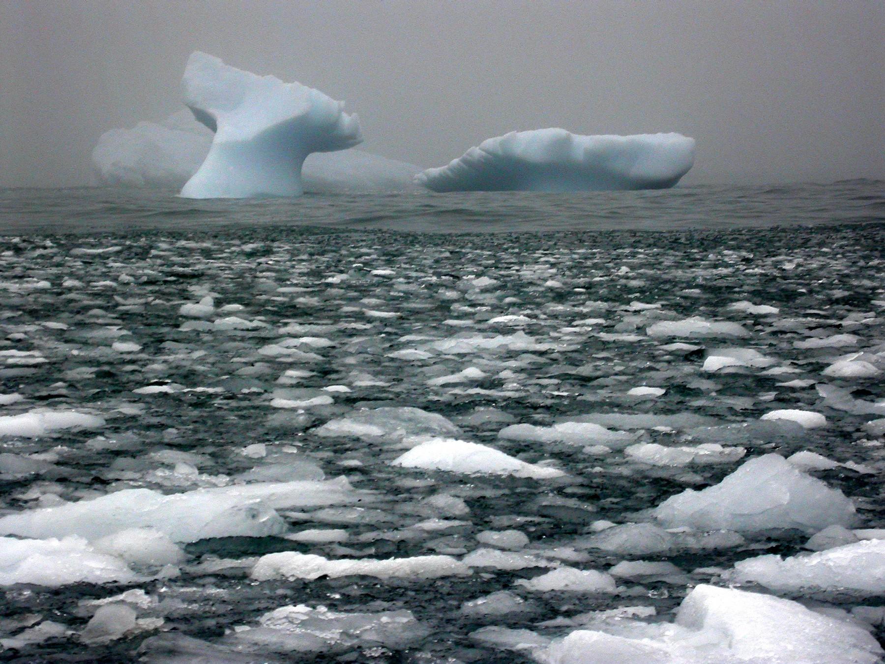 whale ice.jpeg