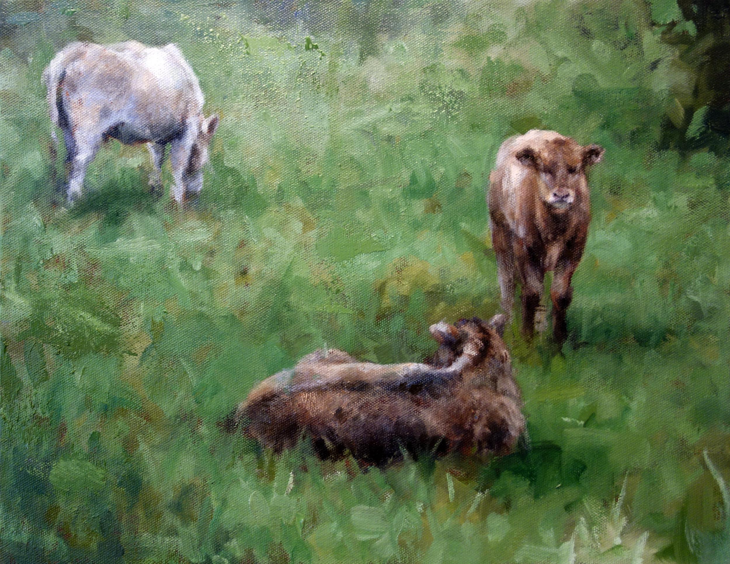 "COWS OF KILLARNEY   oil on canvas 11"" x 14"" 2015"