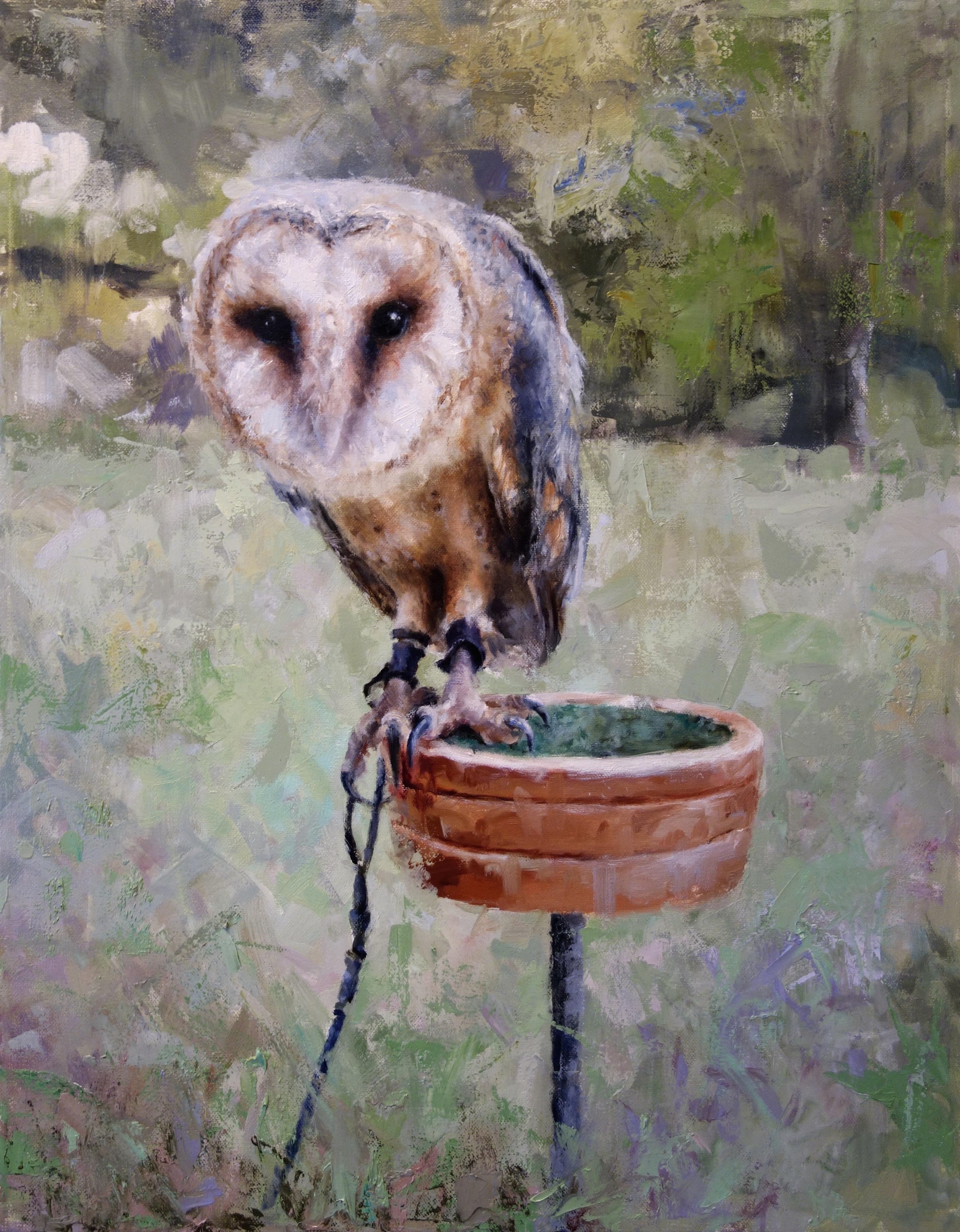 "ADARE OWL  oil on canvas 20"" x 16"" 2015"