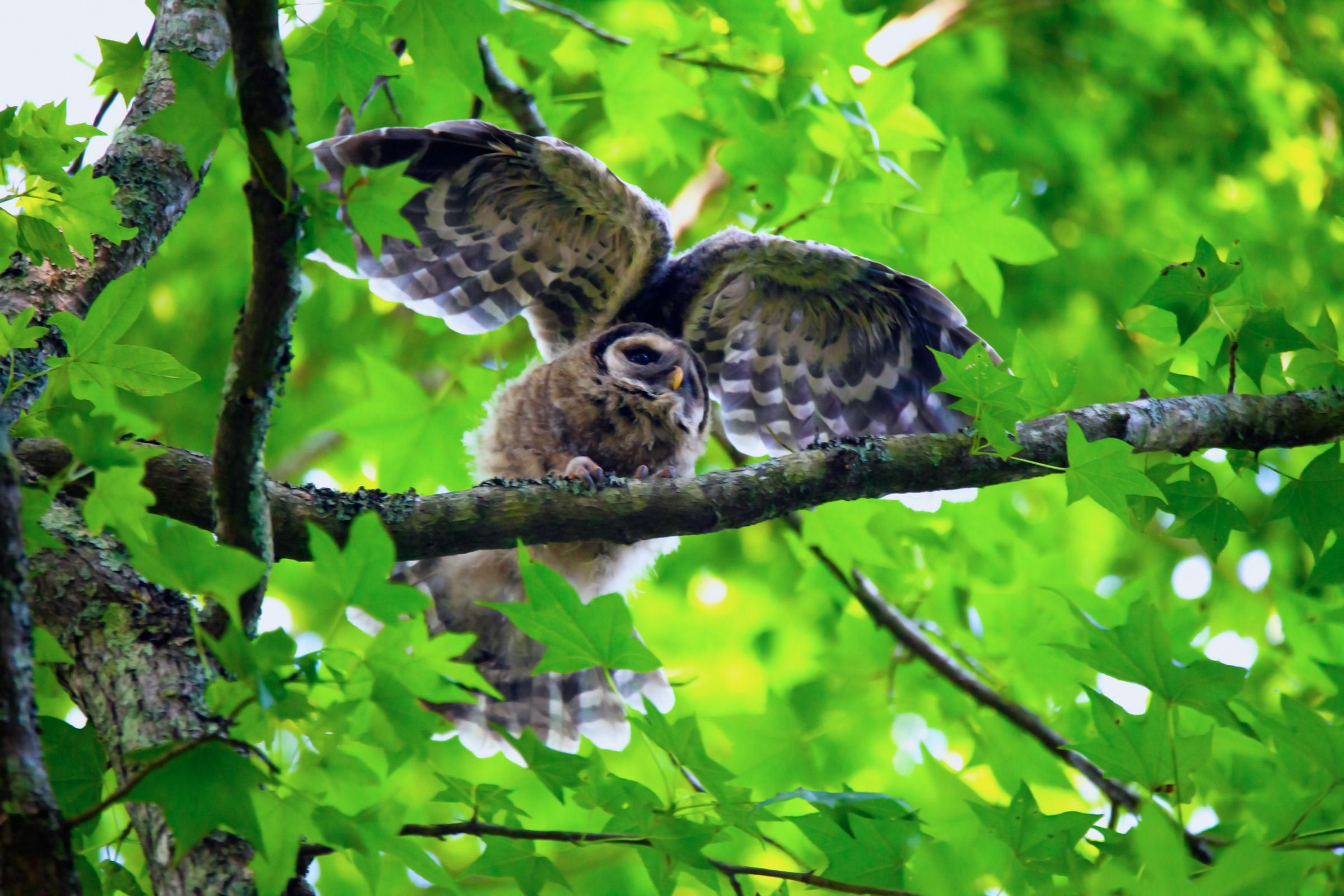 Owl wings.jpg