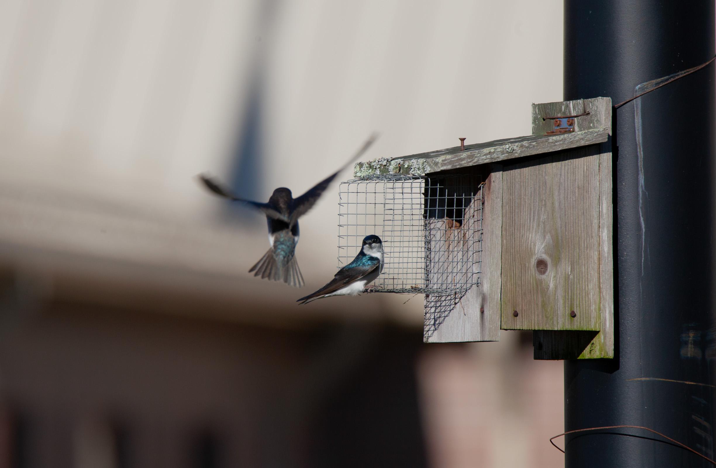 Two teal birds.jpg