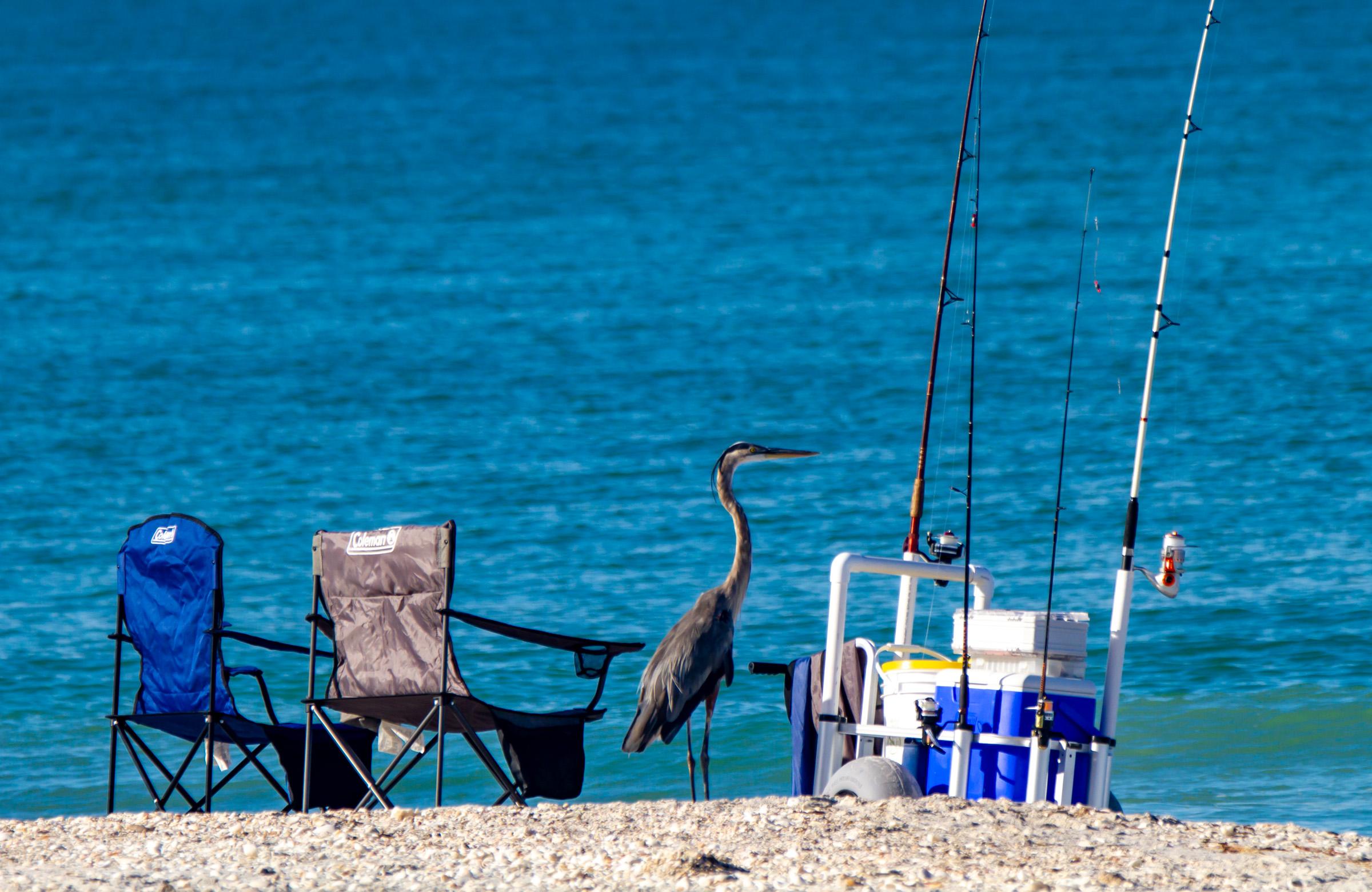 Blue Heron Beach Fishing