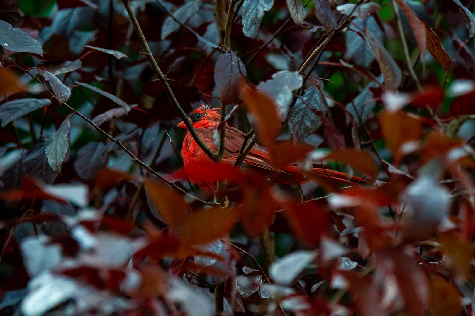 Cardinal Sep022019_0260.jpg