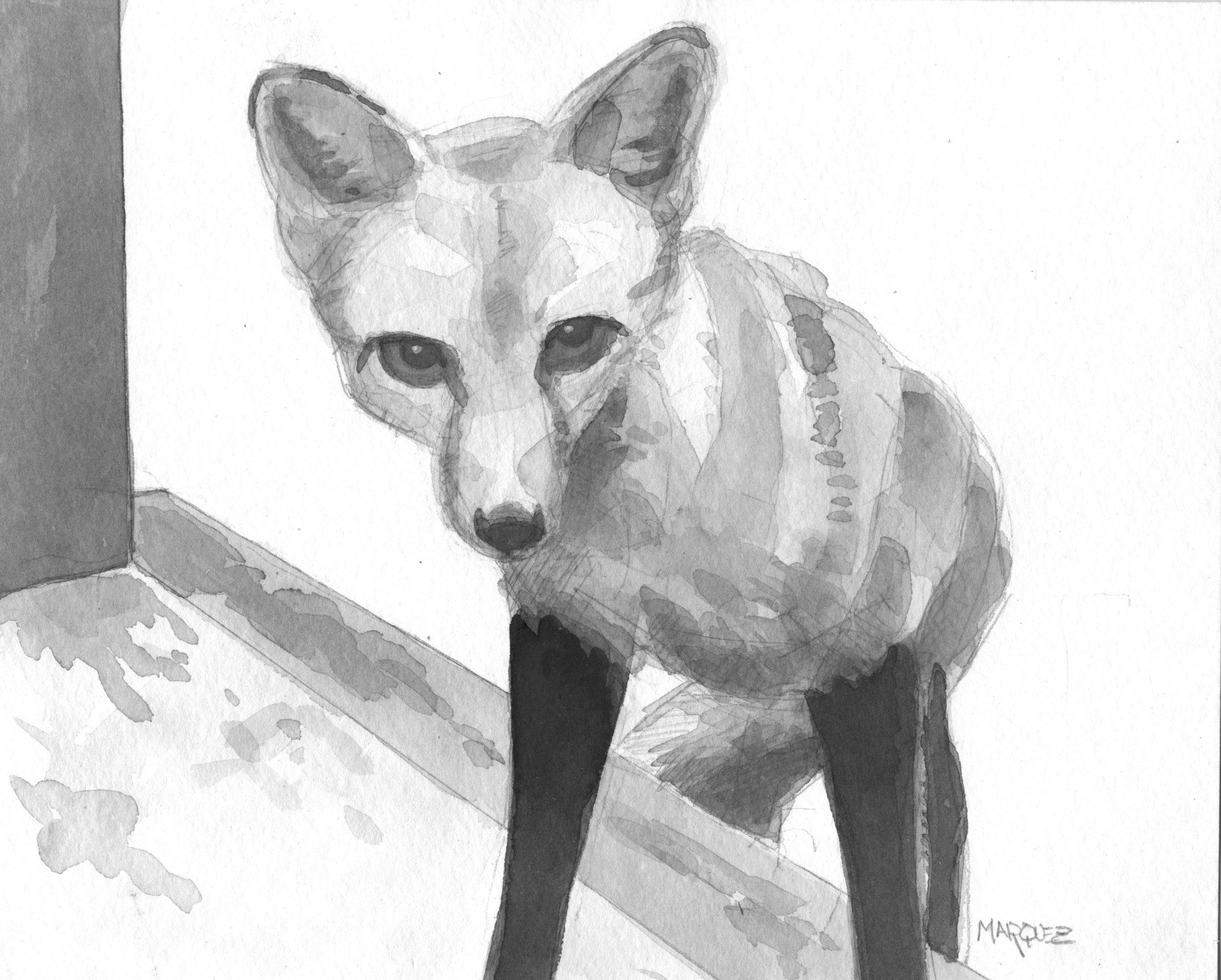 Fox on Steps