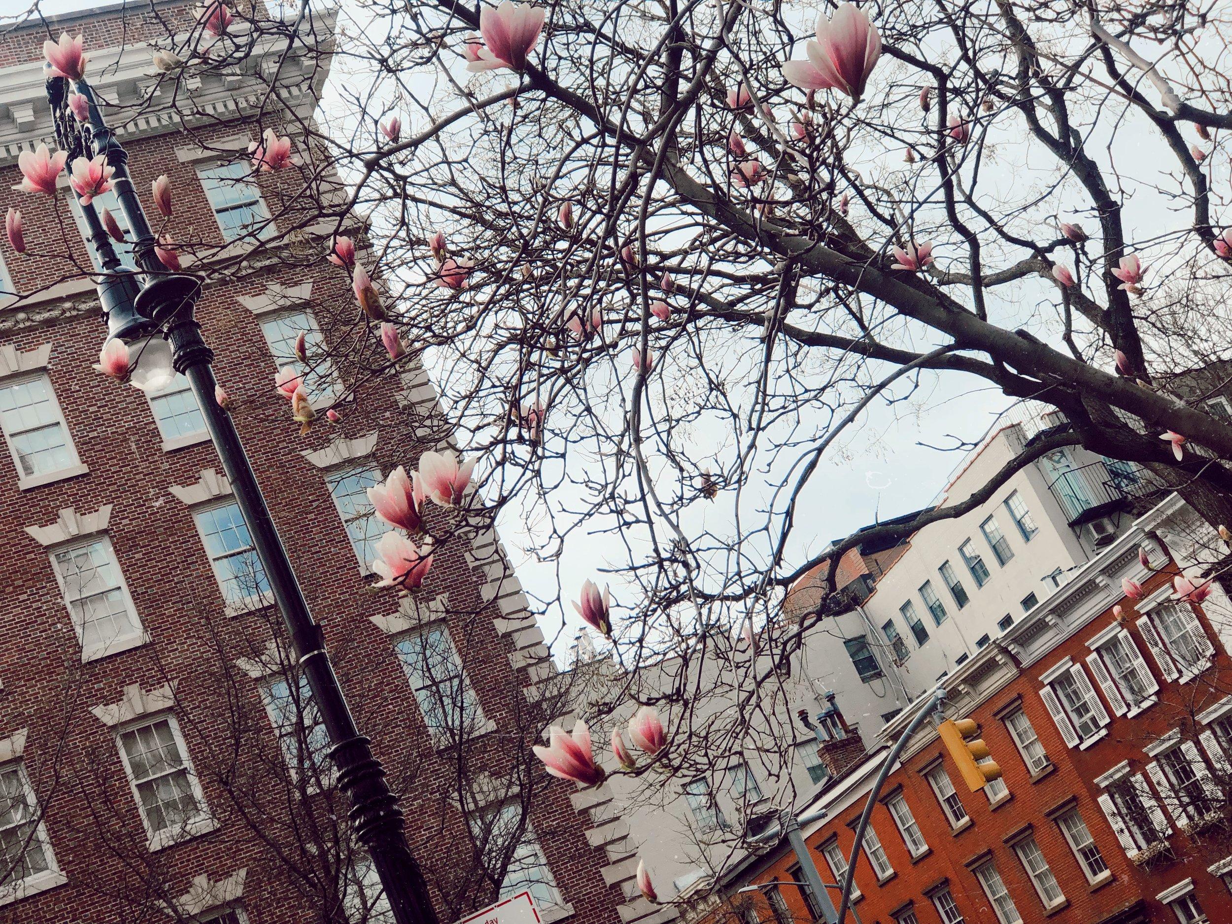 NYC Spring