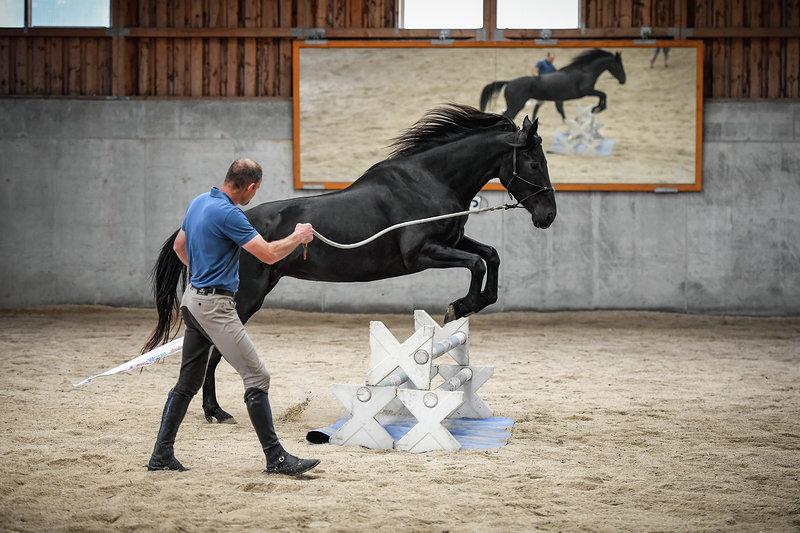 keep it natural - Wir helfen Pferden und Menschen ihre Beziehung zu verbessern und so gemeinsame Ziele zu erreichen. Von der Privatstunde über Kurse und Intensivwochen bis zur Jungpferdeausbildung, aber auch Hilfe bei schwierigen Pferden - wir unterstützen dich gerne!