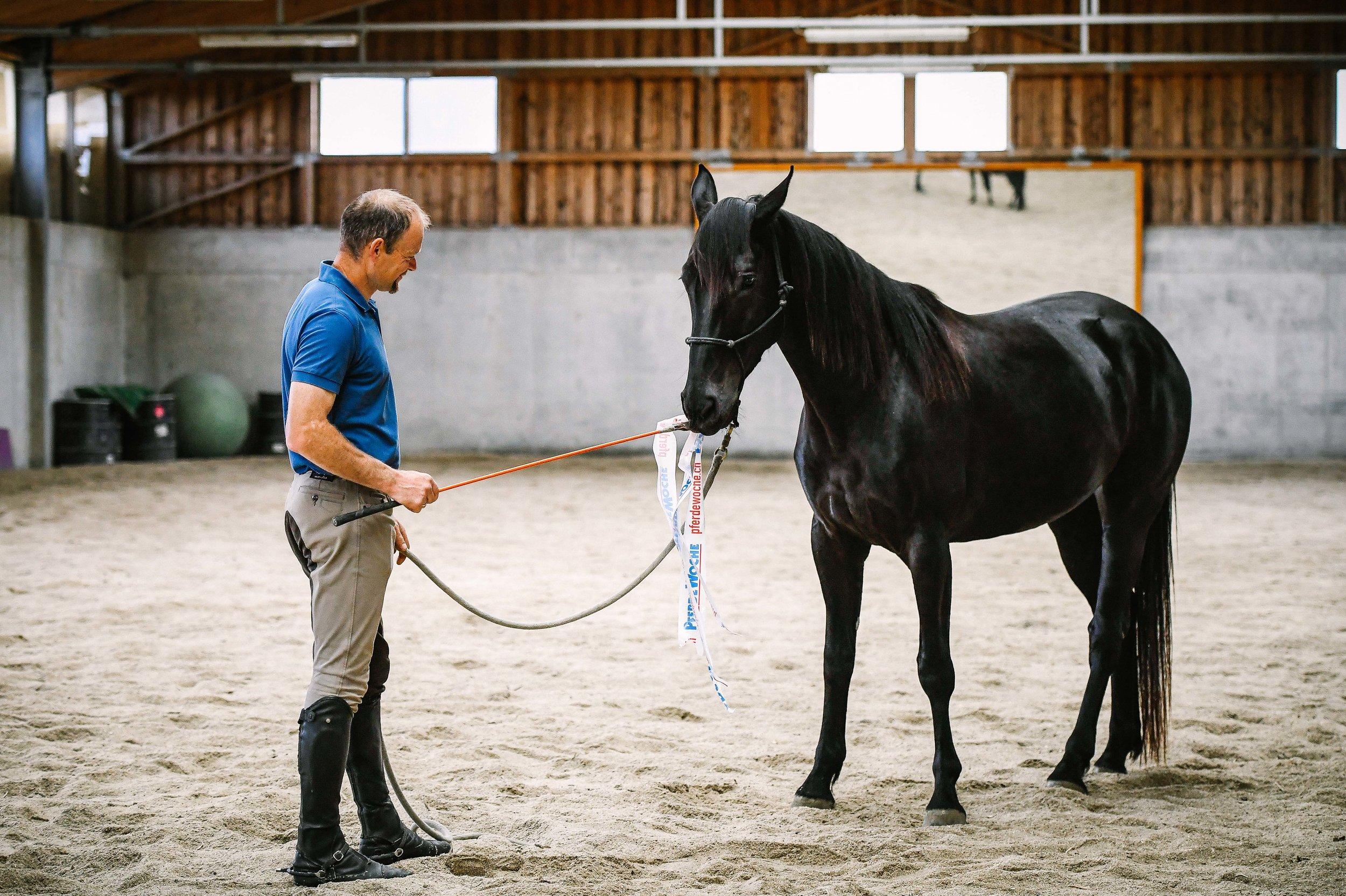 Pferdeausbildung - Liebe, Kommunikation und Führungsqualitäten in ausgeglichenen Mengen sind die Grundpfeiler einer erfolgreichen Partnerschaft.Als erstes etablieren wir mit Ihrem Jungpferd eine gemeinsame Sprache, indem wir ihm die