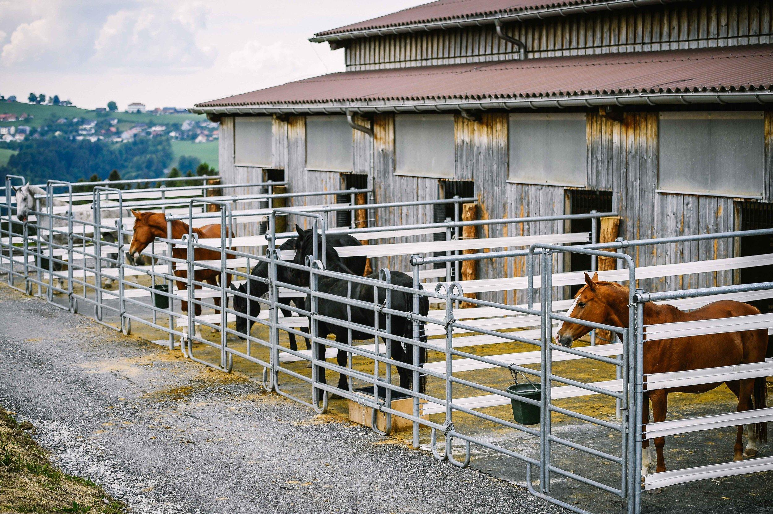 Pferde die längerfristig bei uns bleiben, leben in Gruppenhaltung als Herde. Für unsere Ausbildungspferde haben wir Auslaufboxen mit direktem Blick übers Tal und hinauf zum Alpstein.