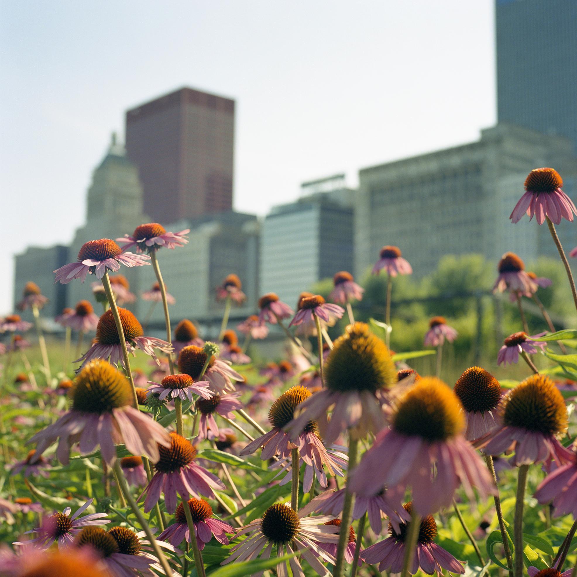 Lurie Garden, Millennium Park Chicago