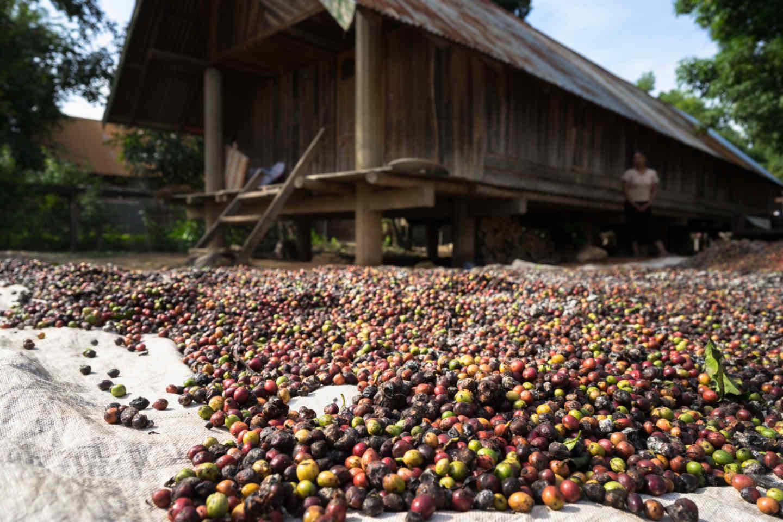 coffee_bean_natural_process.jpg