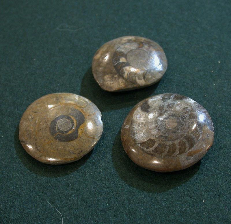 aiming-sight-fossil-ammonite.jpg