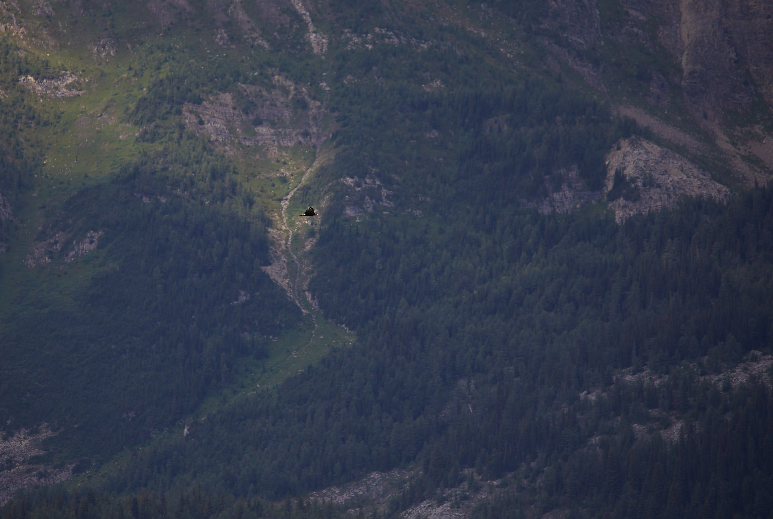 Mount Assiniboine 41.jpg