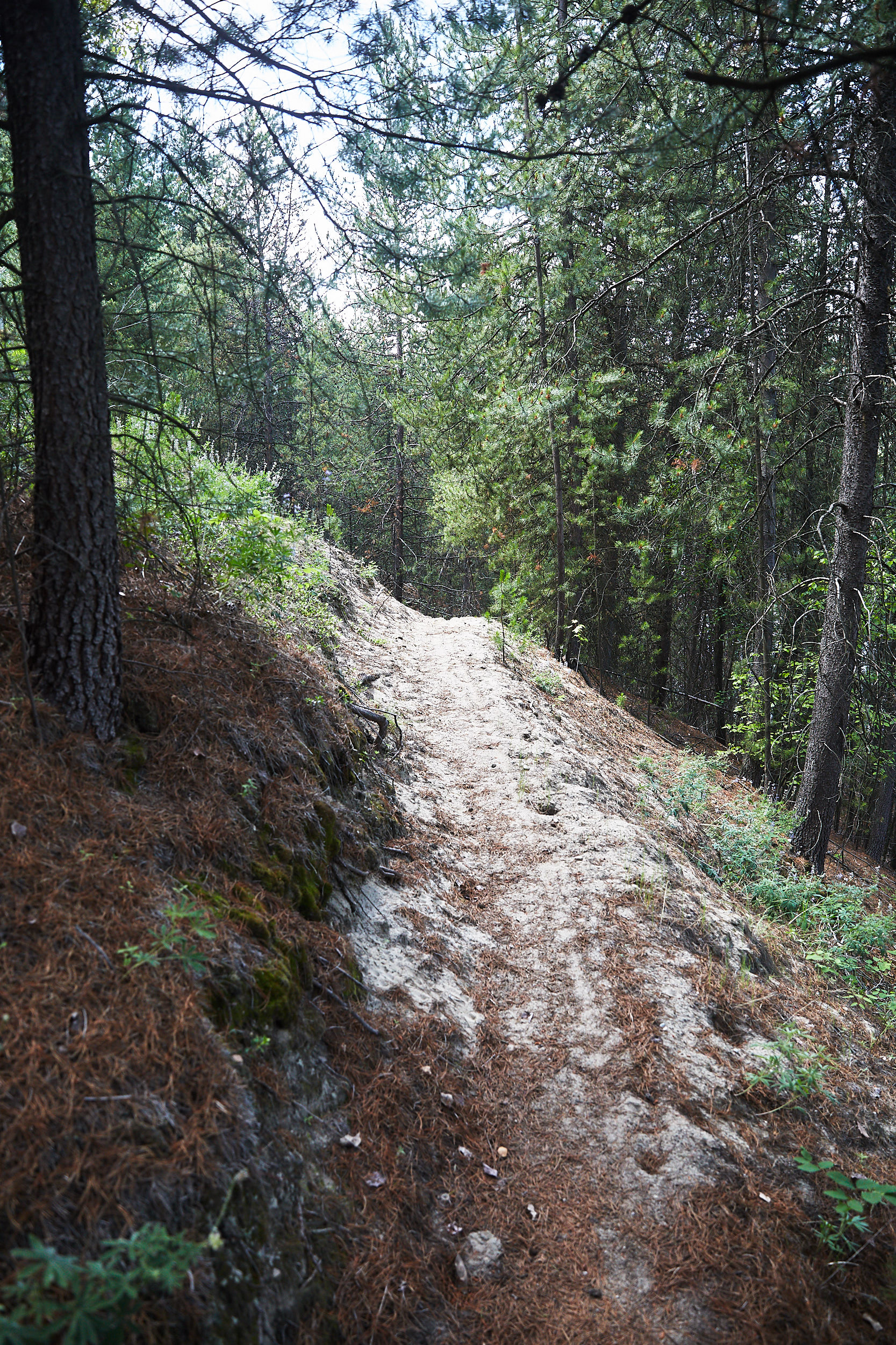 The trail between the town of 'Trail' and 'Castlegar' turned out to be one of the most difficult of the trip. Very narrow single track, bugs, ticks, sand, extremely hot and much longer than expected.