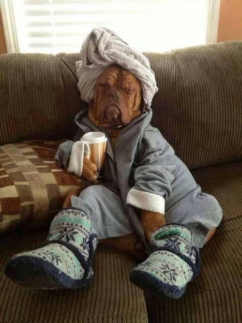 funny-dog-robe-towel-slippers1.jpg
