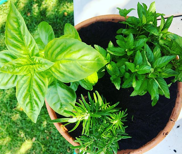 It's not too late to spruce up your garden! We've got beautiful herbs and lots of vegetable starts left. Vegetable plants are now 50% off!!