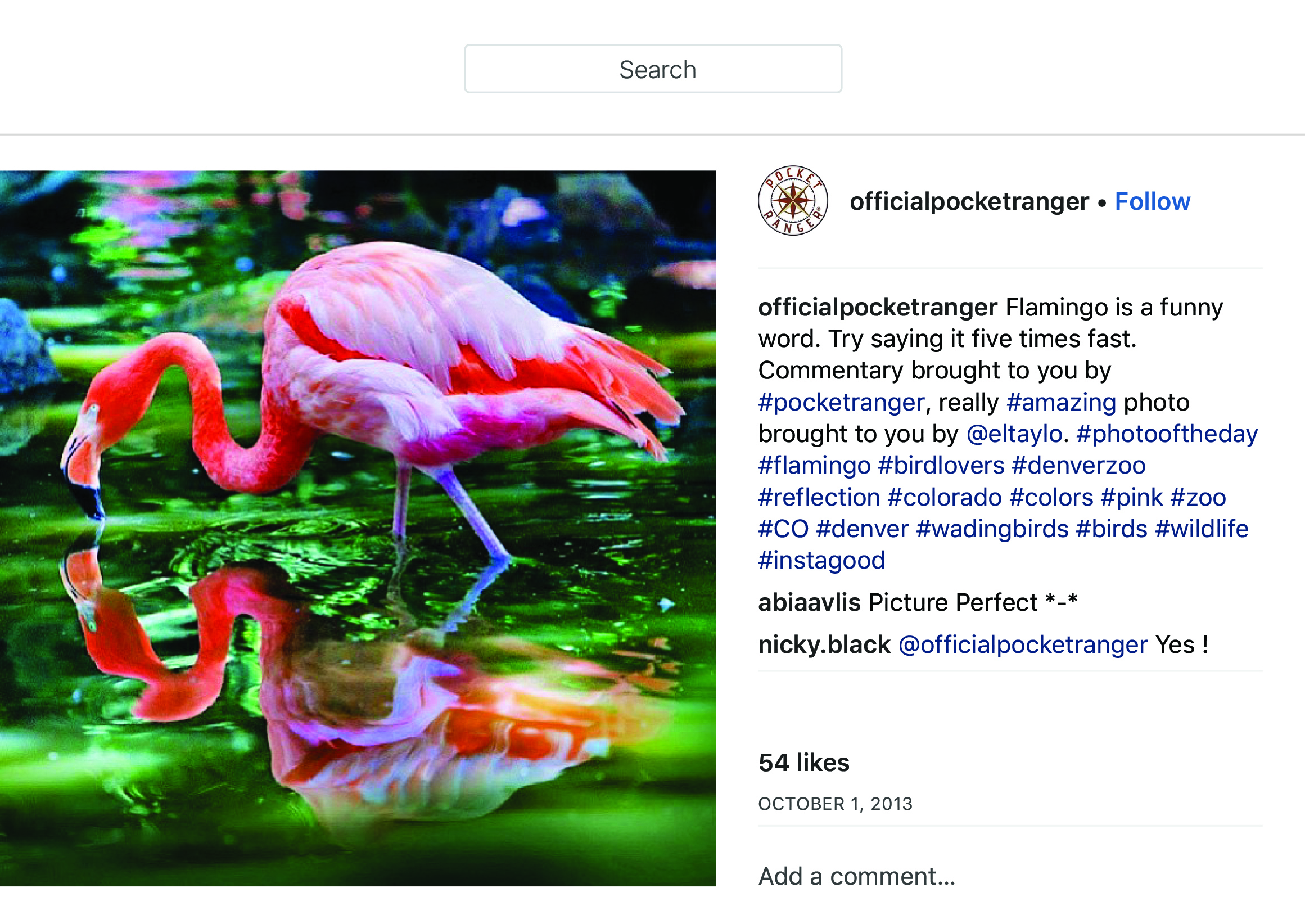 """OfficialPocketRanger on Instagram_ """"Flamingo is a funny word. Try saying it five times fast. Commentary brought to you by #pocketranger, really #amazing photo brought to you…"""" copy.jpg"""