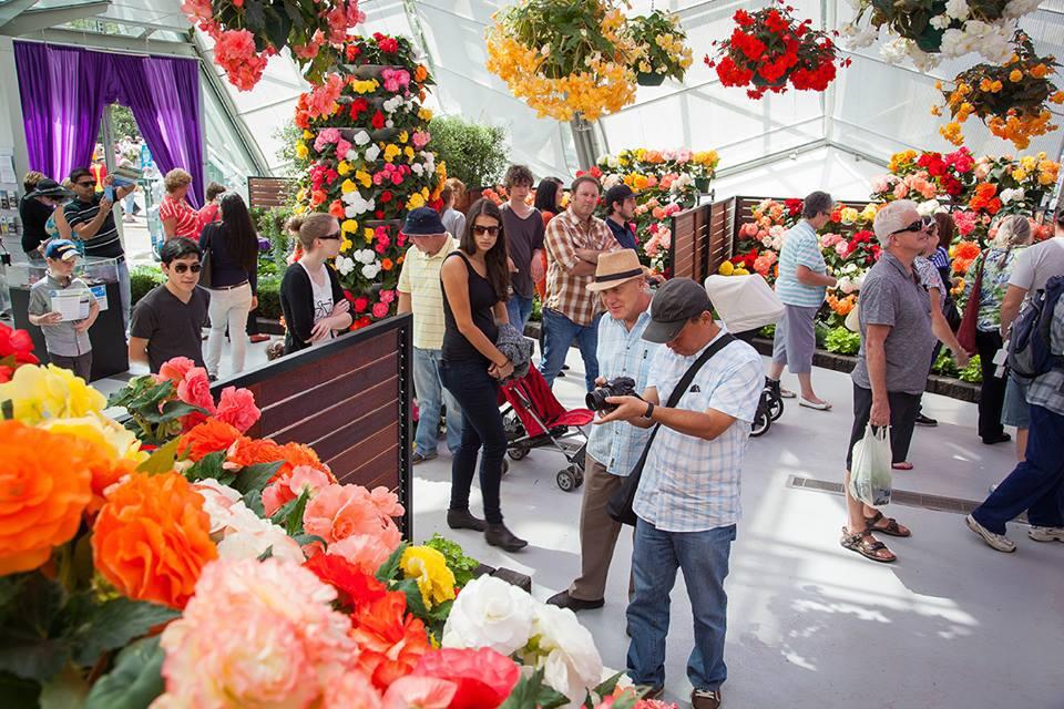 ballarat-begonia-festival-2016-flowers-market-stla21.jpg