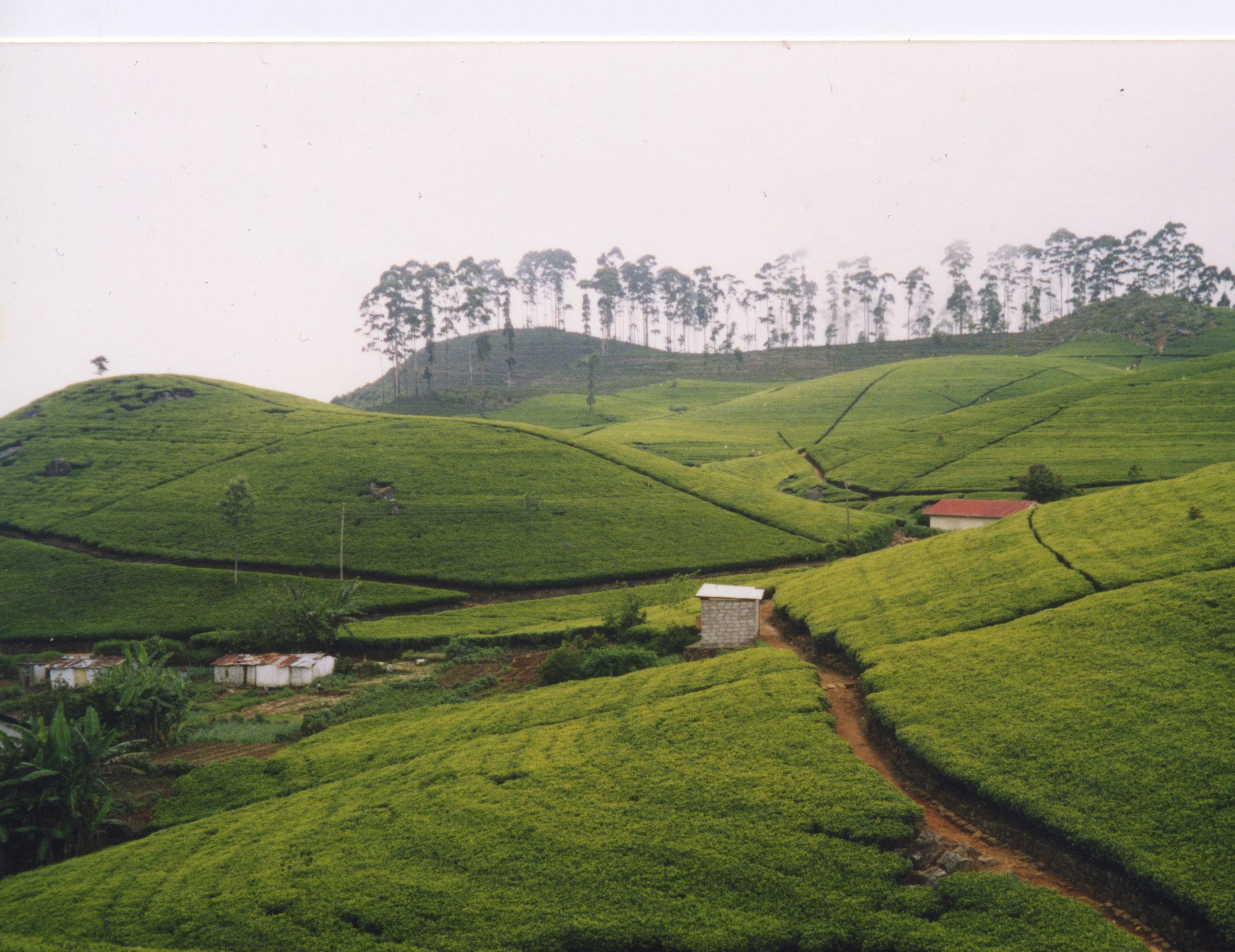 Tea Country, Sri Lanka