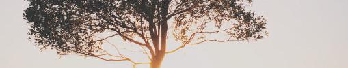 tree4.jpg