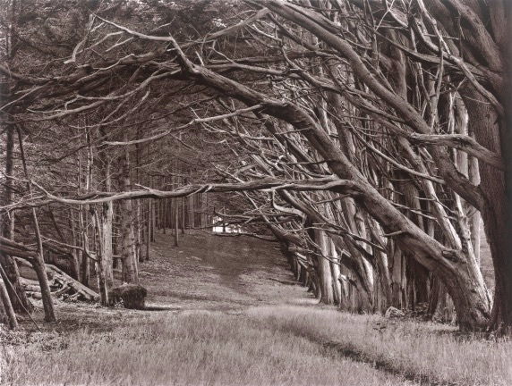 """""""Pathway - Moss Beach"""" a carbon print by Fred Dusel. Carbon prints take a lot of time, care, and precision. Just like us."""