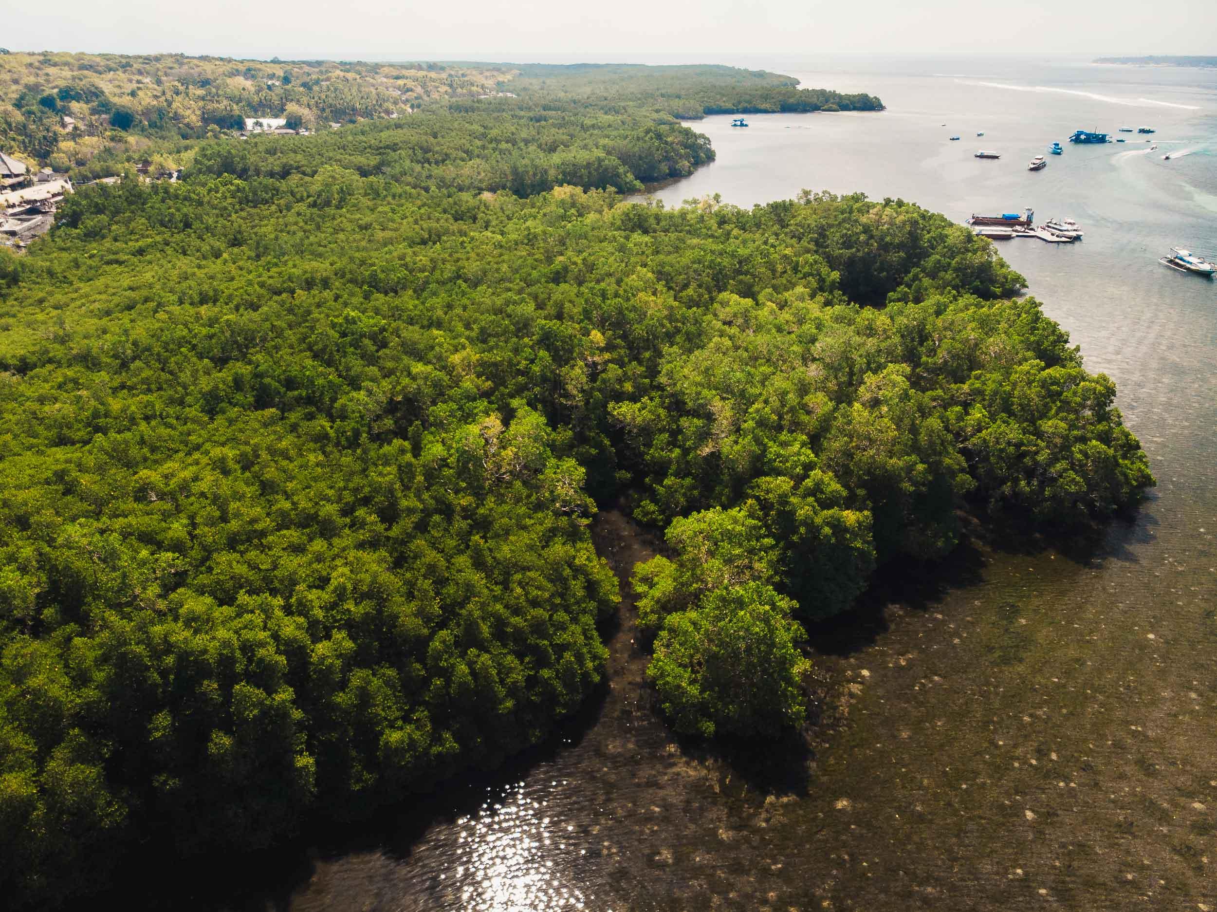 mangroves_nusa_lembongan.jpg