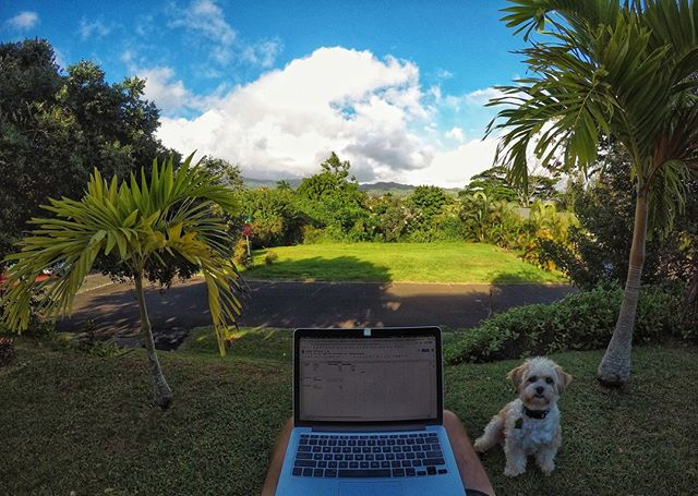 A lot of that #realestatelife is about calling people and following up with them in a systematic, timely manner to see how we can best help them with their real estate needs. We all knew that coming into the business.  No one said that part of the job had to be done from a cubicle.  #kauairealestate #kauairealtor #kauai #ownonkauai #ownonkauairealestate #alohalife #kalaheo #dogbosses