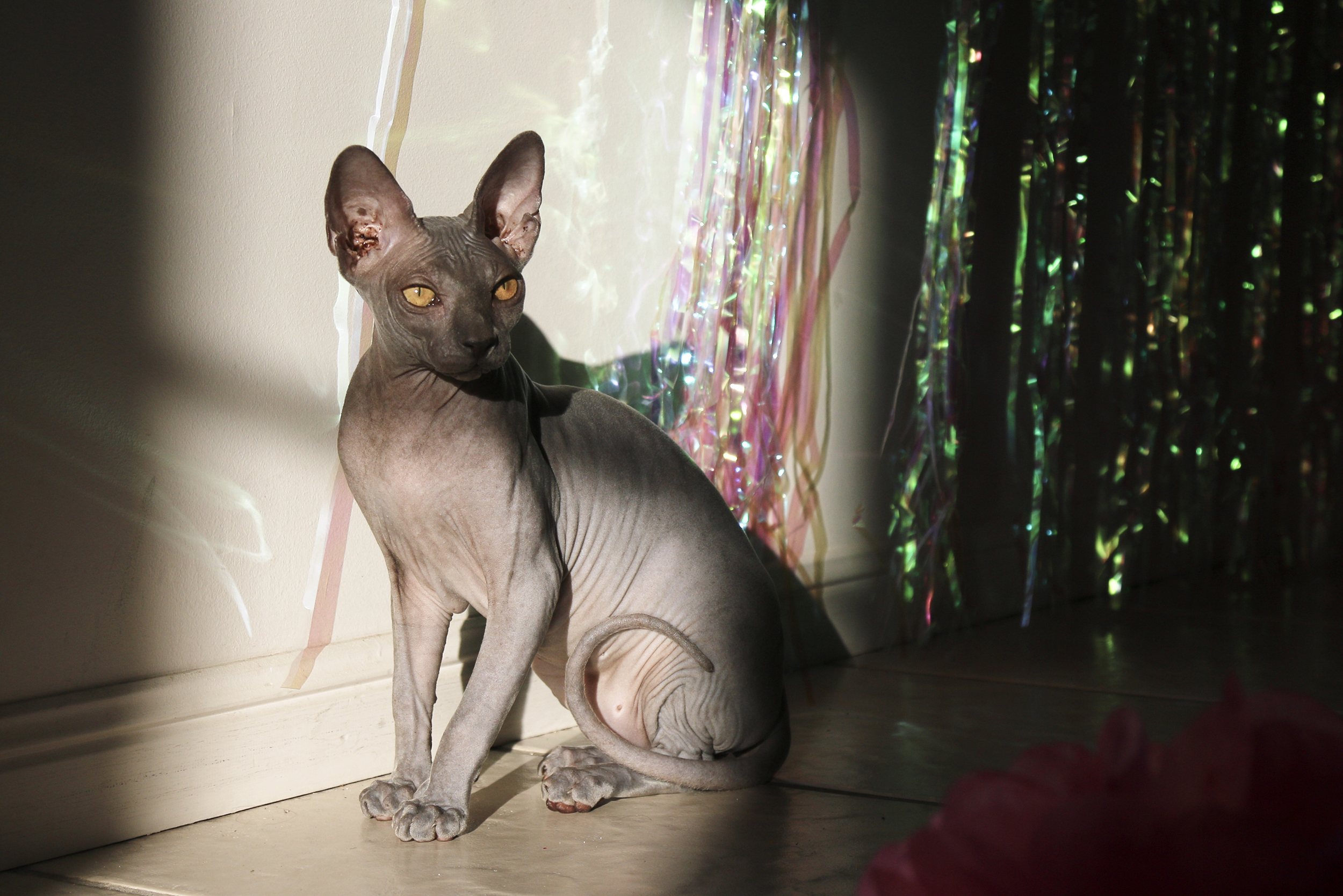 HALLOWS SPHYNX? - Who are they…?