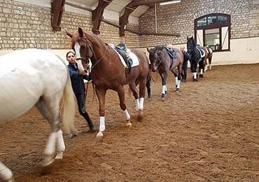 LE TRAVAIL A PIED - Le travail à pied se décline au travers du travail à la longe et du travail aux longues rênes.Il s'agit d'un mode de pratique permettant aux cavaliers d'aborder le contact avec le cheval d'une manière différente pour les cavaliers initiés et d'observer les mouvements et réactions du cheval.Ce travail favorise la décontraction et la souplesse du cheval. Il s'agit également d'une méthode de travail permettant de contribuer à la progression des cavaliers et chevaux.Cette méthode est enseignée en Galop 6.7 par Jean-Pierre Tuloup, instructeur de Dressage.