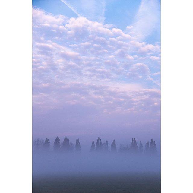 Misty morning 🌄