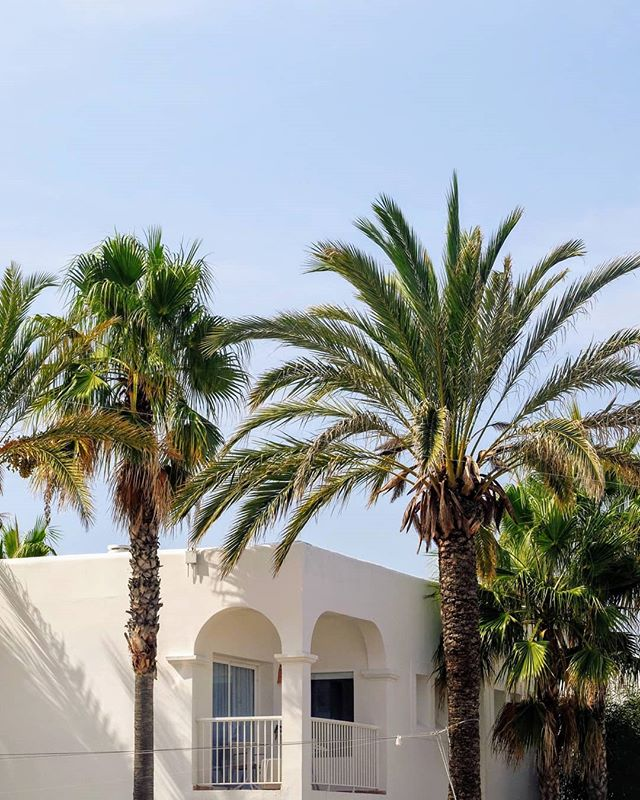 Hotel Aura - Ibiza • • • • • #ibiza #spain #palm #palmtrees #blue #bluesky #minimal #palepalmcollection #somewheremagazine #minimalzine #ifyouleave #phroom #myfeatureshoot #cereal #kinfolk