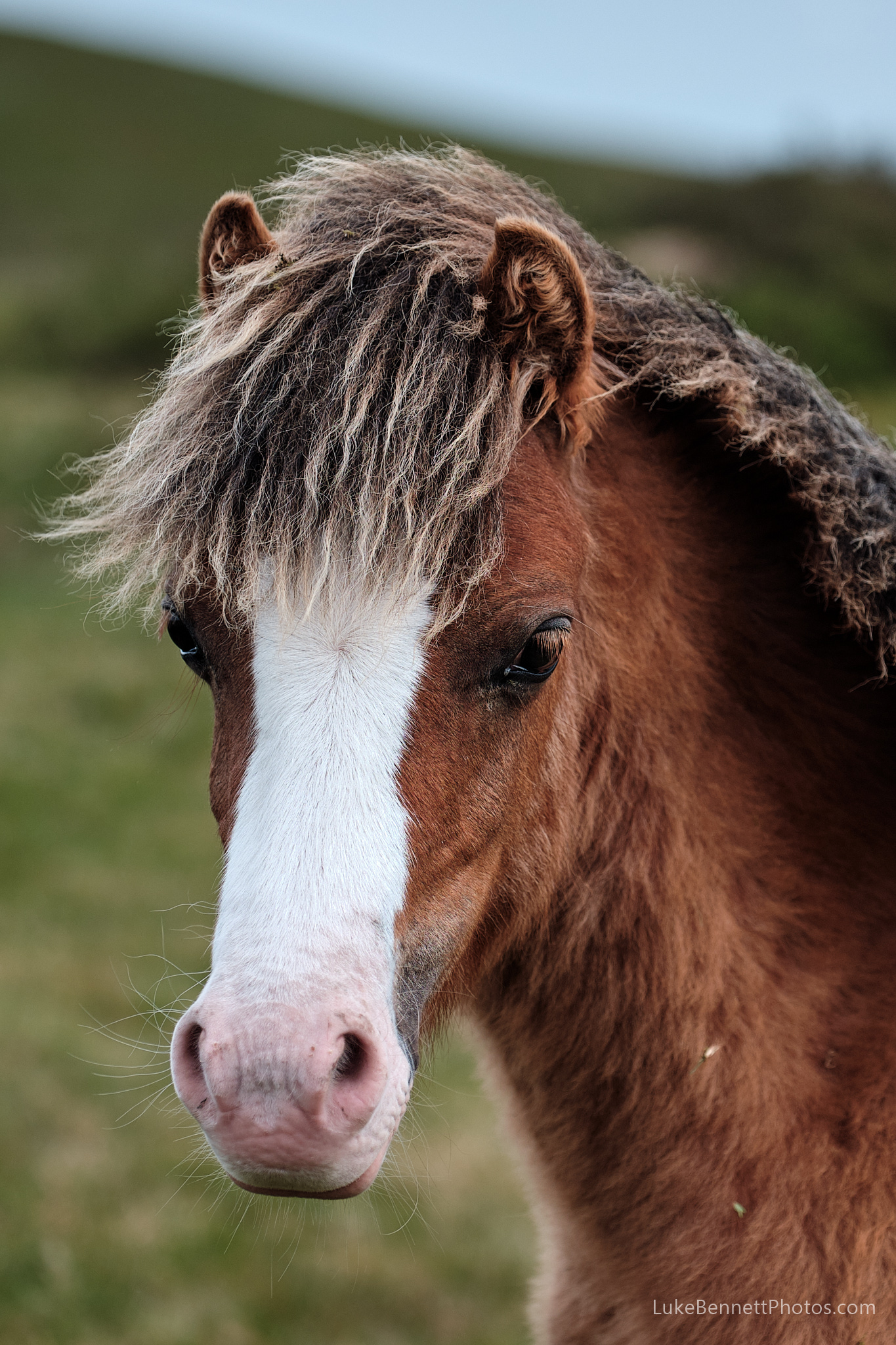 This pony thinks it's Pat Sharp
