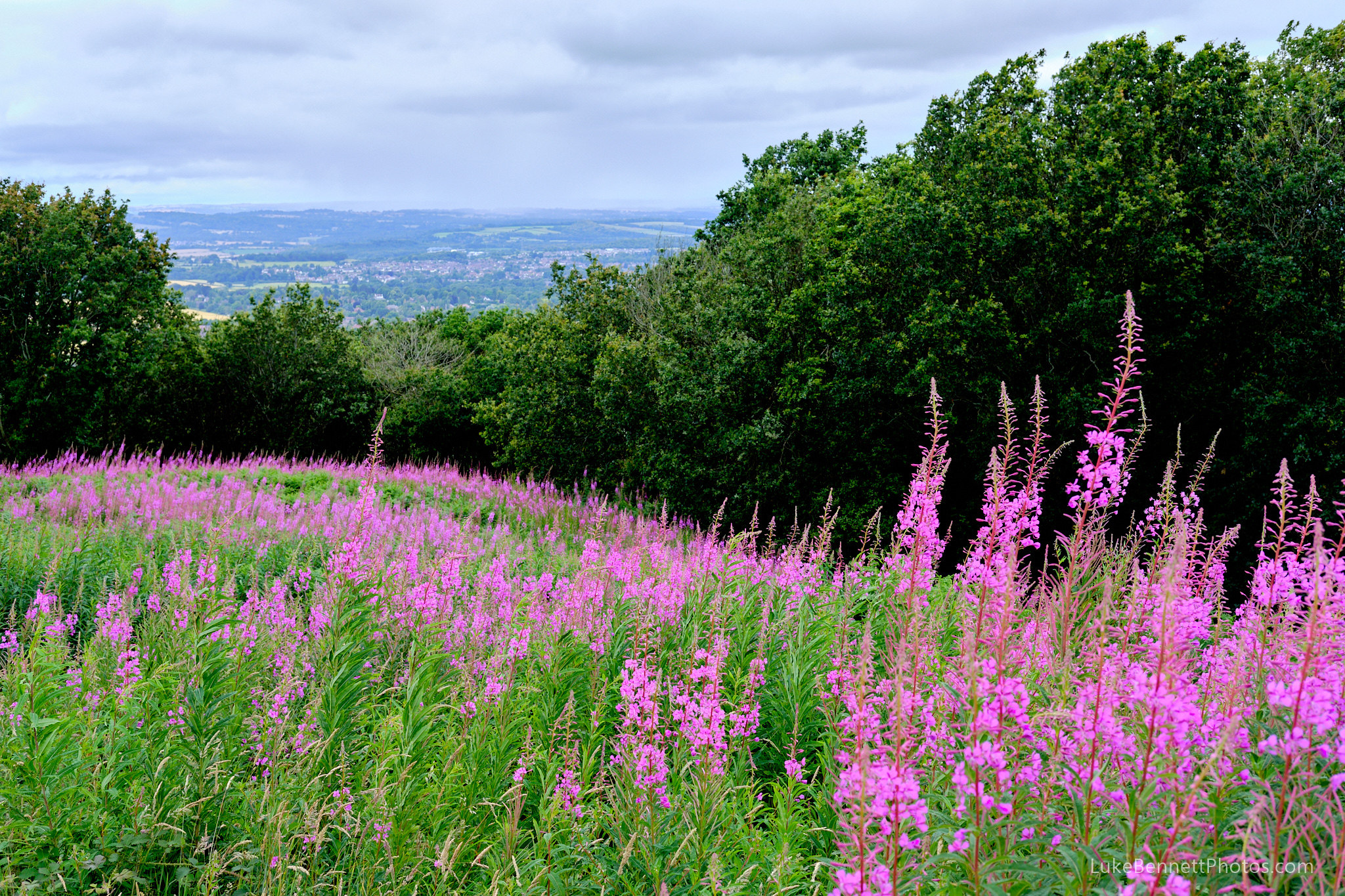 Wild flowers on the Clent Hills