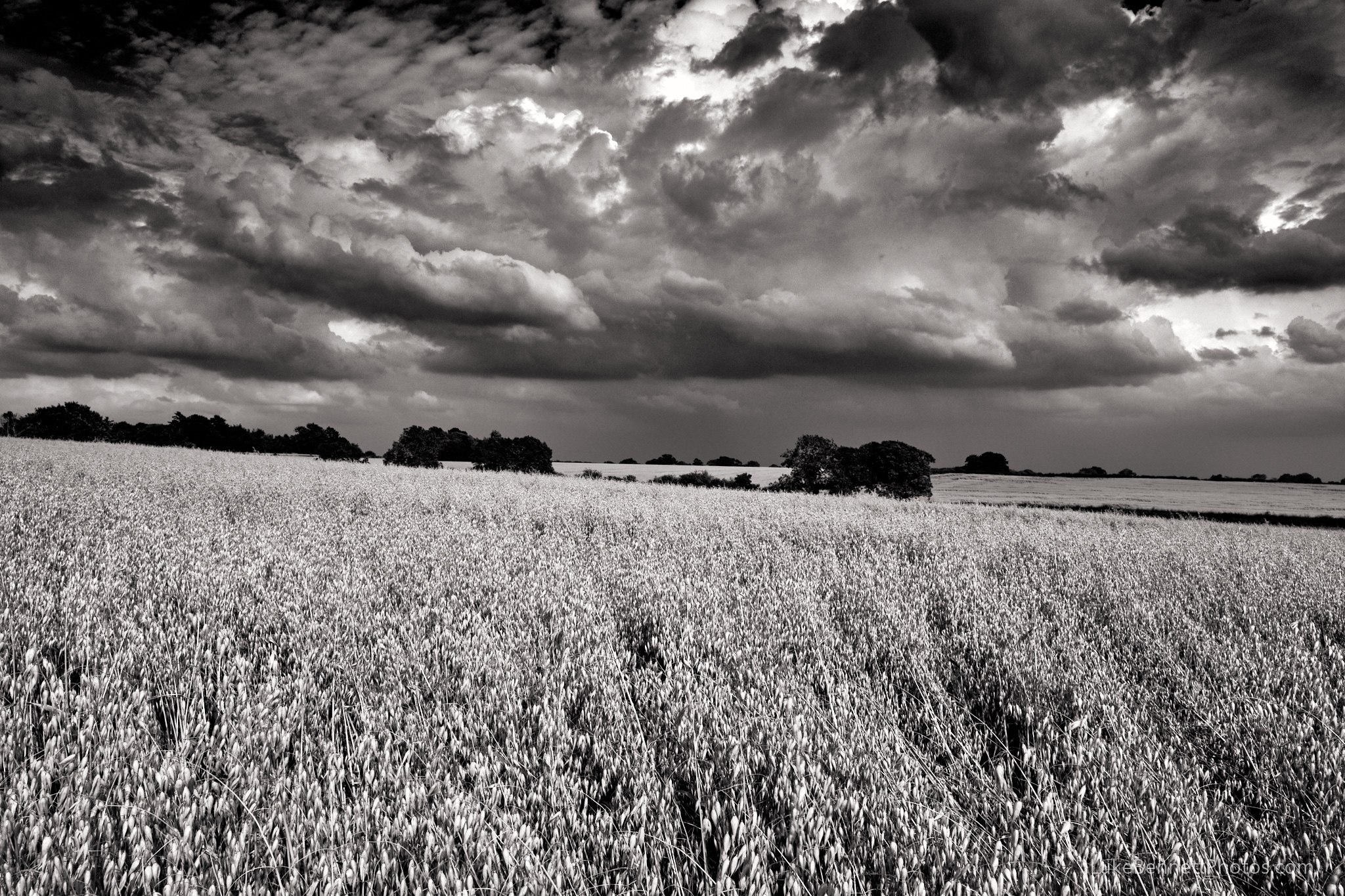 Storm clouds and oat fields