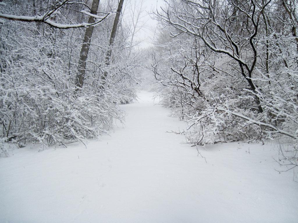 SNOWforest_path_in_winter_9_by_martut-d4rgx72