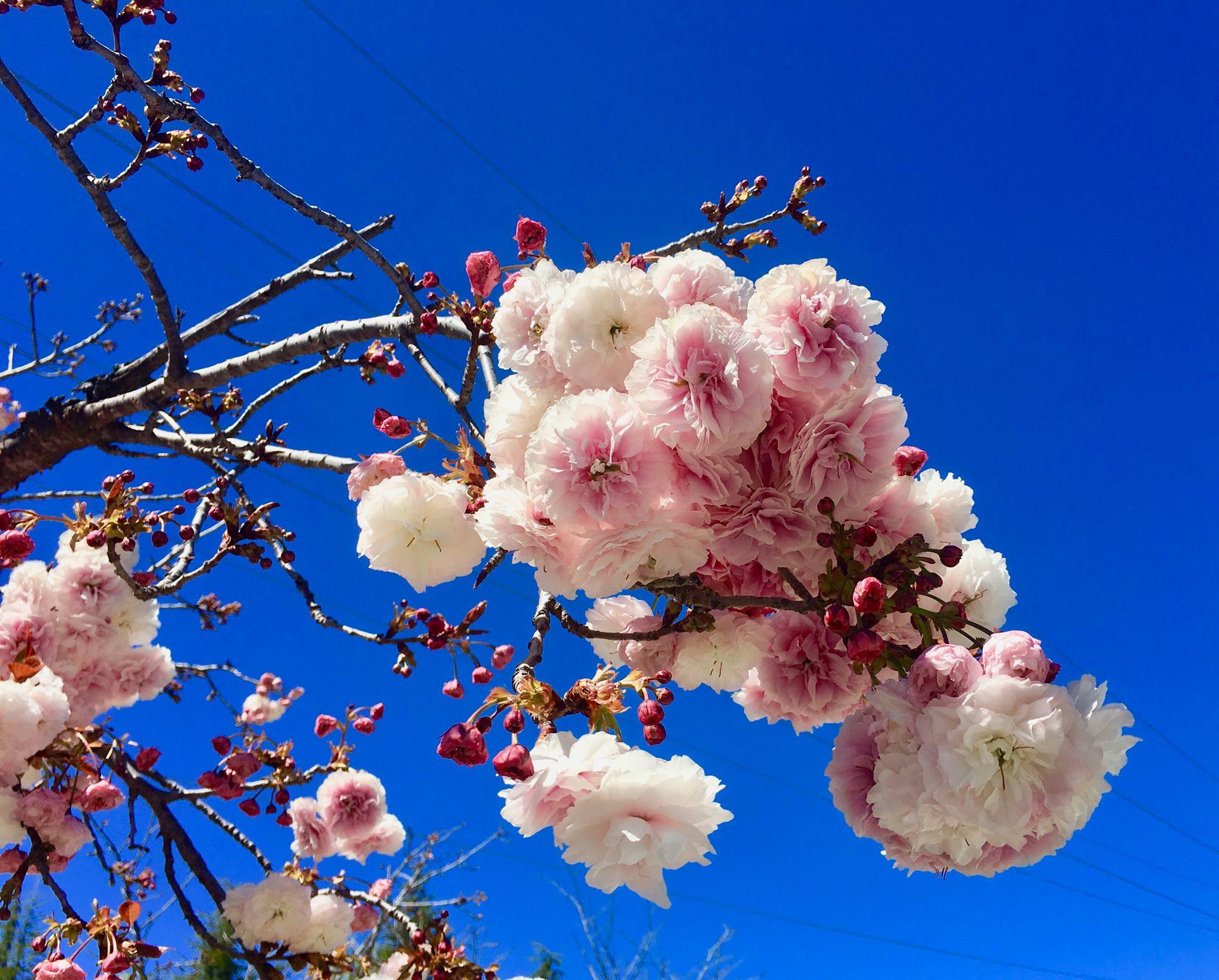 springtime-in-sf-bay-area-2.jpg