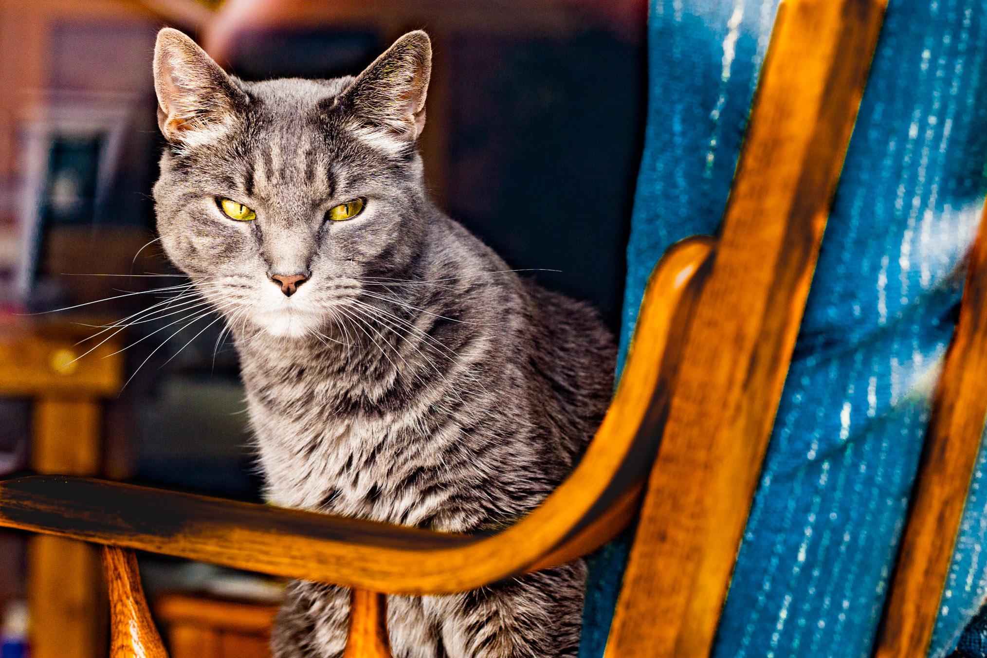 cat in a chair.jpg