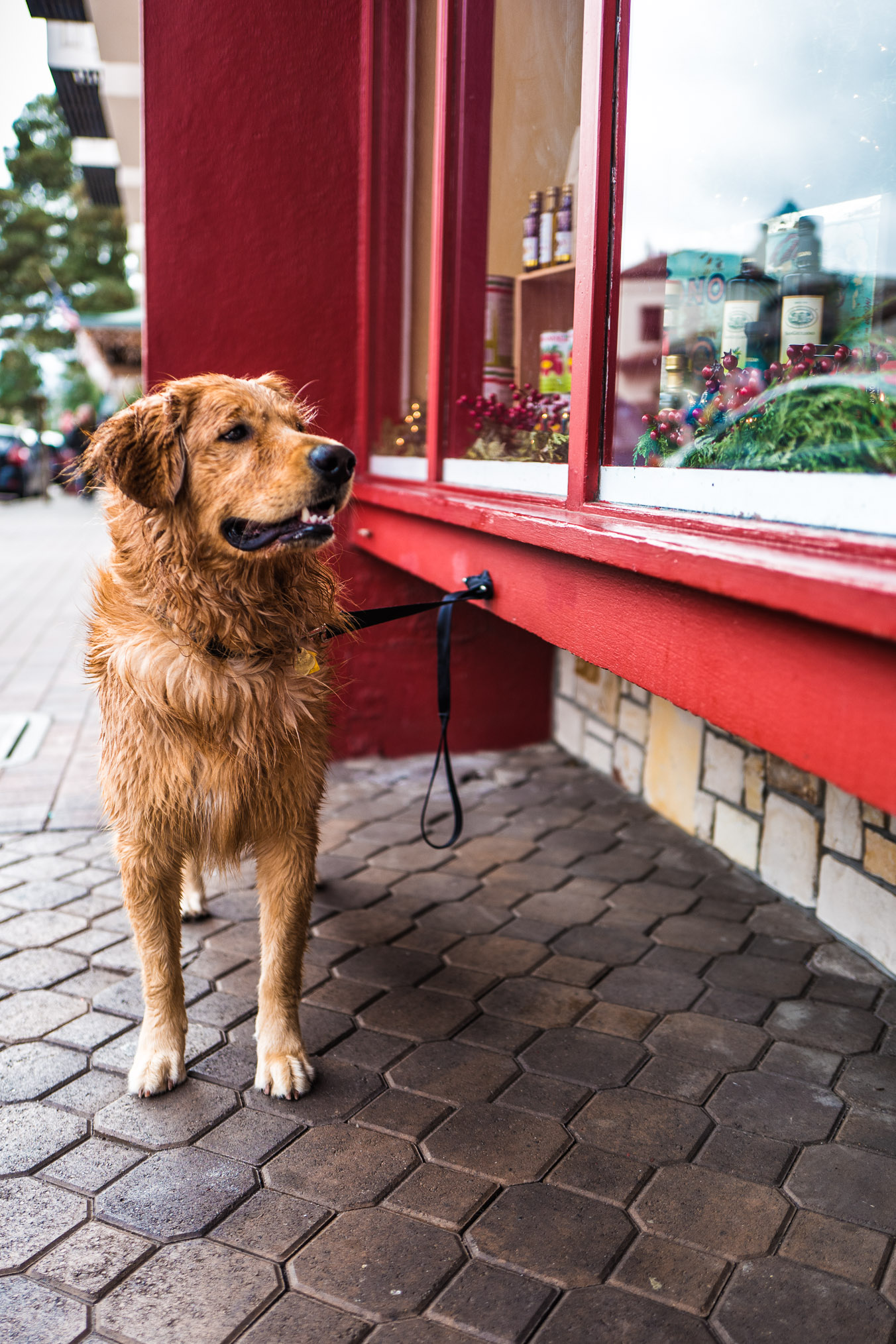 carmel wet dog.jpg